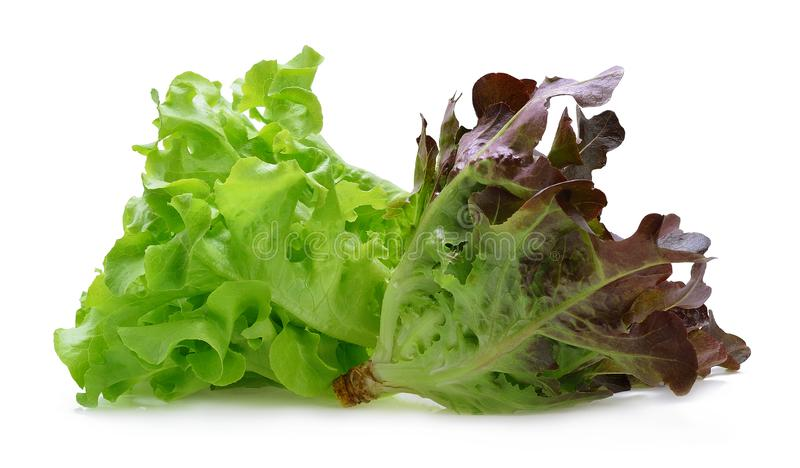 Red and green oak lettuce royalty free stock photography