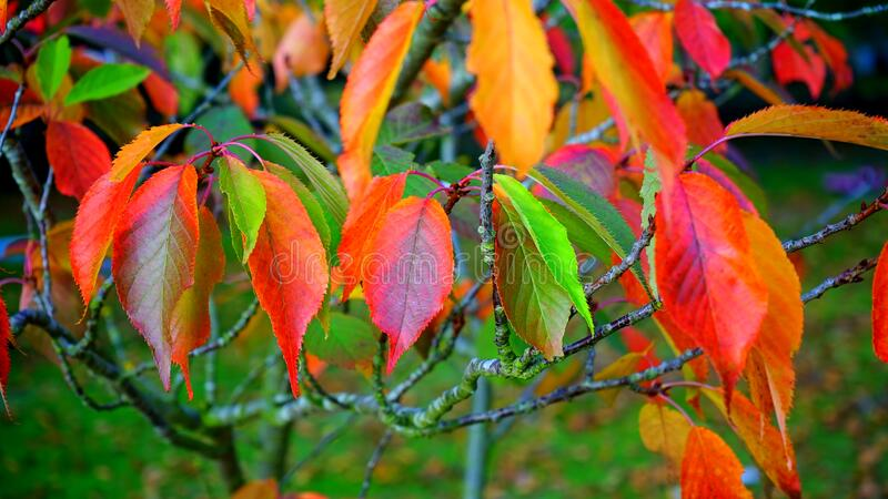 Red Green And Orange Leaves Free Public Domain Cc0 Image
