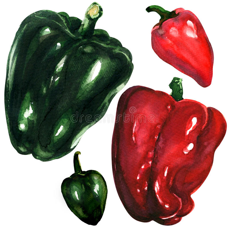 Red and green peppers on white background stock illustration