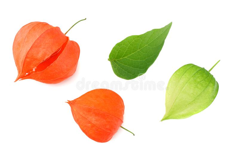 Red and green physalis fruit isolated on white background. top view royalty free stock image