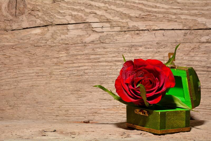 Red And Green Rose Inside Green And Brown Chest Box Free Public Domain Cc0 Image