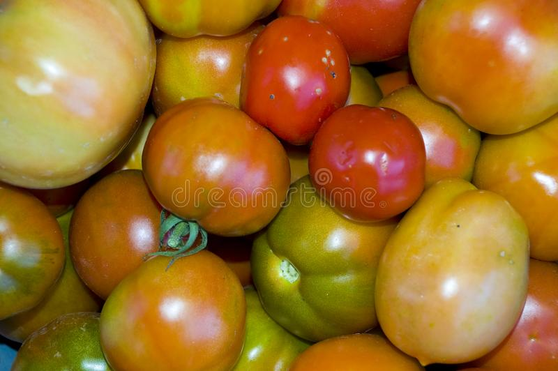 Download Red And Green Tomatoes Background Stock Image - Image of yellow, background: 6709205
