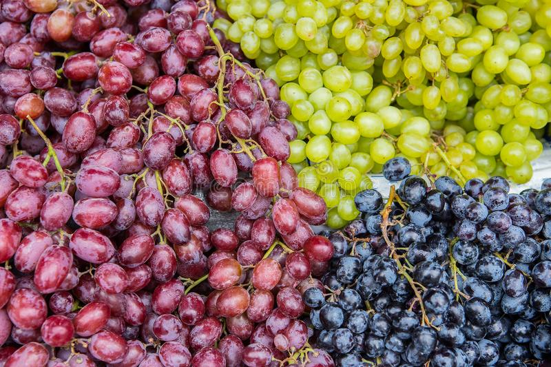 Red wine grapes on the market. Red and green wine grapes in market. Fruits background royalty free stock photography