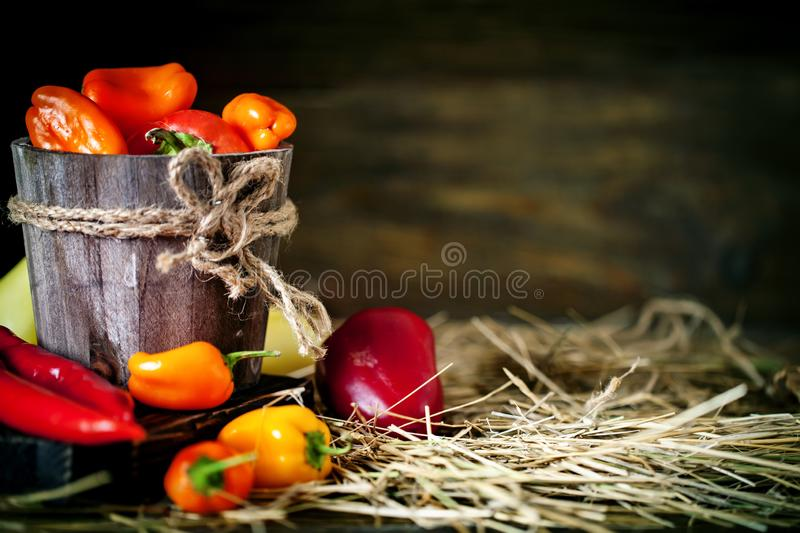 Red, green and yellow sweet bell peppers on the table, close up. Harvest Festival. Autumn background. Selective focus stock photo