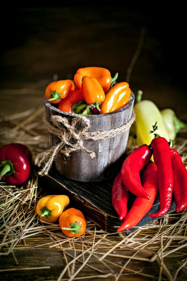 Red, green and yellow sweet bell peppers on the table, close up. Harvest Festival. Autumn background. Selective focus stock photography