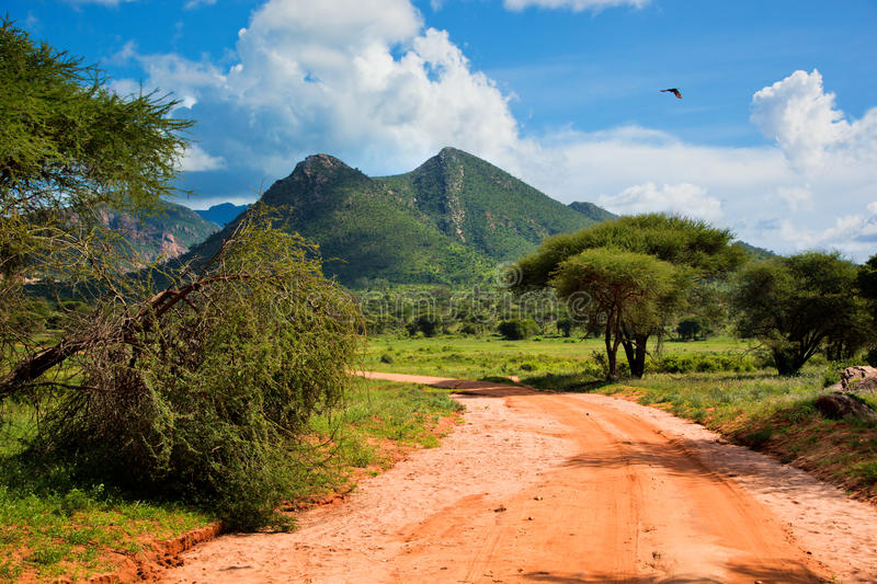 Red ground road, bush with savanna. Tsavo West, Kenya, Africa royalty free stock images