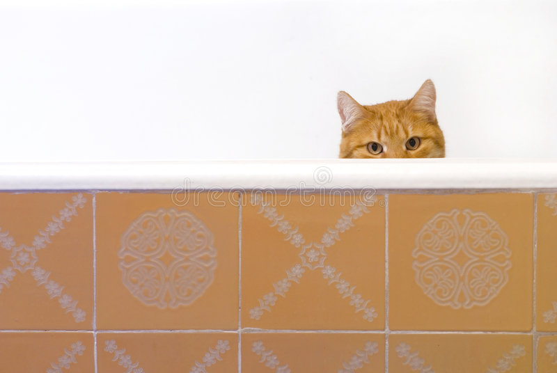 Download Red-haired cat stock photo. Image of clever, bathtub, abstract - 5150252