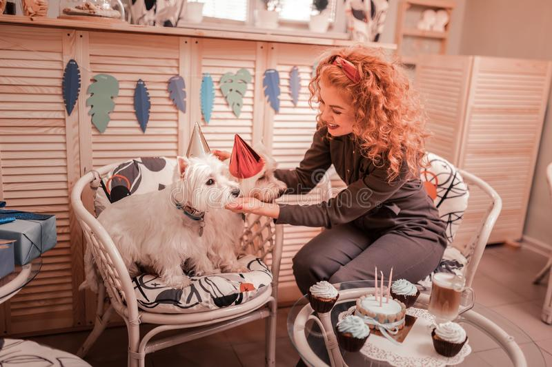 Red-haired curly woman putting birthday hat on her dogs stock photography