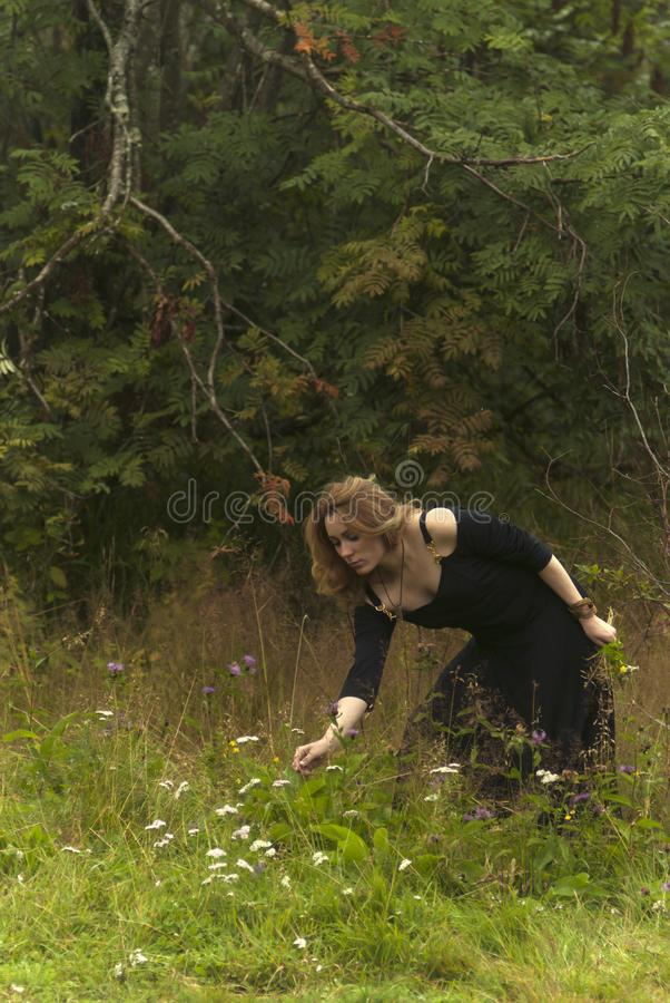Girl in black dress collects herbs. Red-haired girl in a black dress collects herbs at the edge of the forest royalty free stock photos