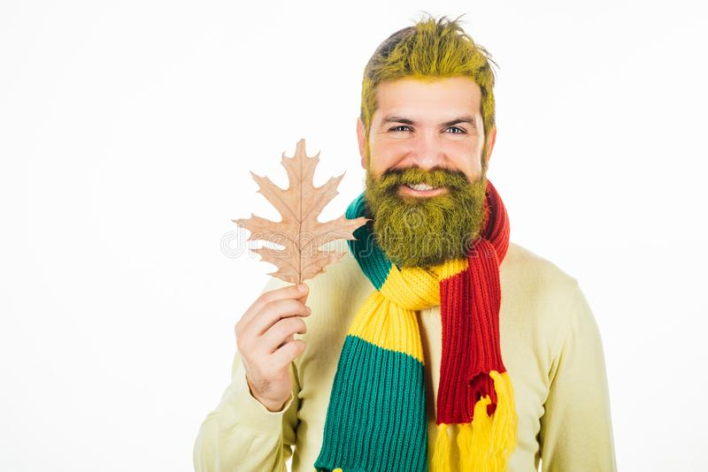 Red-haired man playing with leaves and looking at camera. Bearded man are getting ready for autumn sale. Red-haired man stock photo