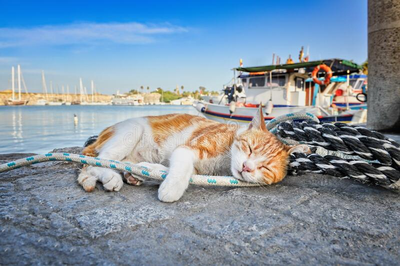 Red-haired sleeping cat on a rope in the harbor on sunny day stock photography