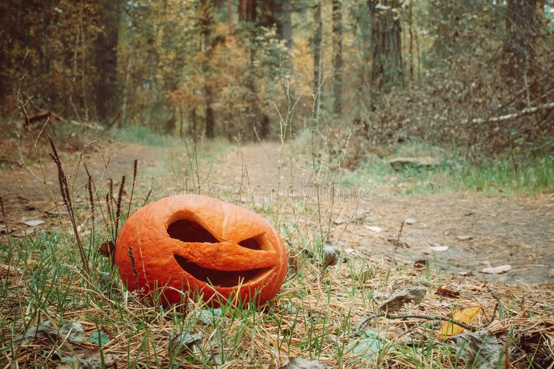 Red halloween pumpkin in the autumn forest stand on a country road. Jack o lantern on the grass royalty free stock photos