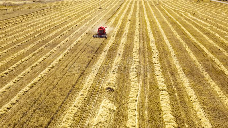 Red harvester in the field reaping rye.  royalty free stock images