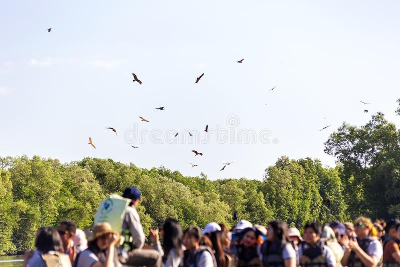 Red hawk in the nature and blurred of group tour. royalty free stock image