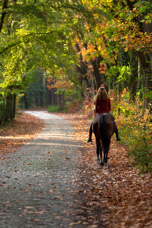 Woman riding brown mare horse avenue lane forest stock photo
