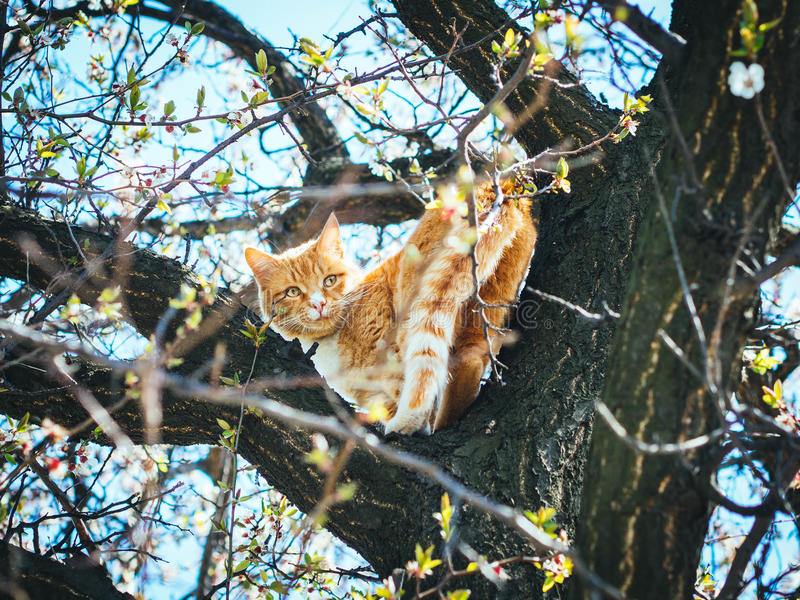 Red-headed cat stock images