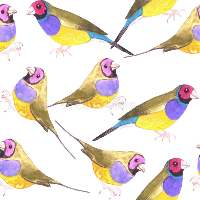 Red headed male Gouldian finch or Erythrura gouldiae bird seamless watercolor birds painting background.  vector illustration