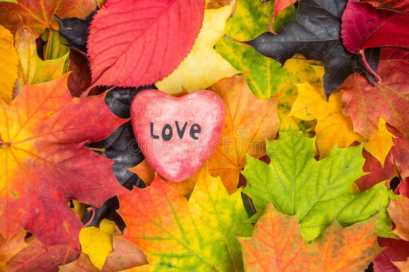 Red heart on Maple Leaves Mixed Fall Colors Background stock images