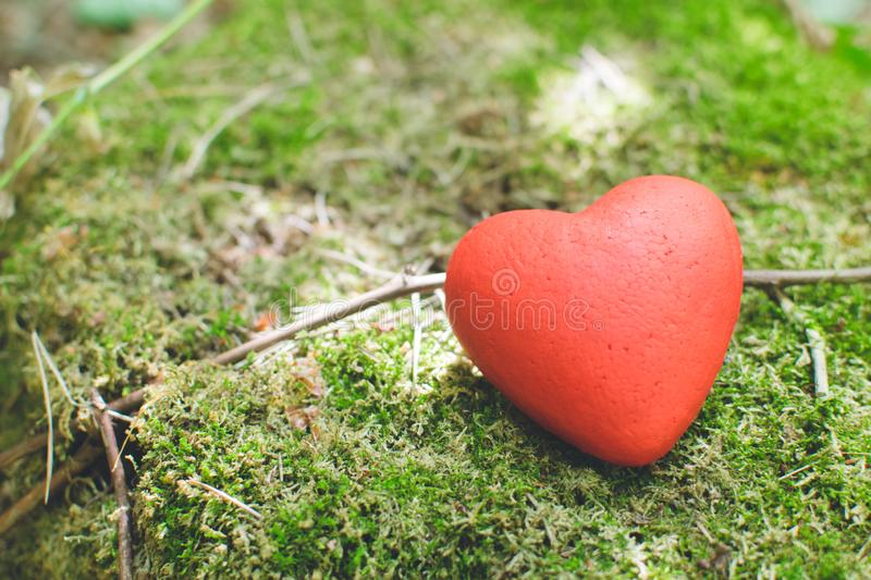 Red heart on moss. in the forest. Love concept. Decorative red heart lying on the moss in the forest. Love concept, background, wedding, design, tree, vintage stock image