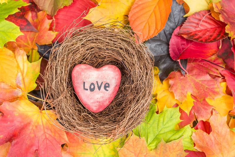 Red heart in nest on Maple Leaves Mixed Fall Colors Background royalty free stock photo