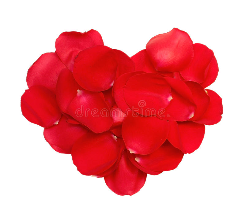 Red heart petals of roses stock photo