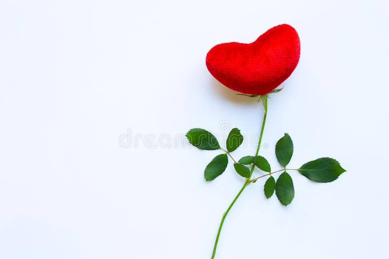 Red heart with rose branch on white, Copy space. Concept background for Valentines Day stock photography