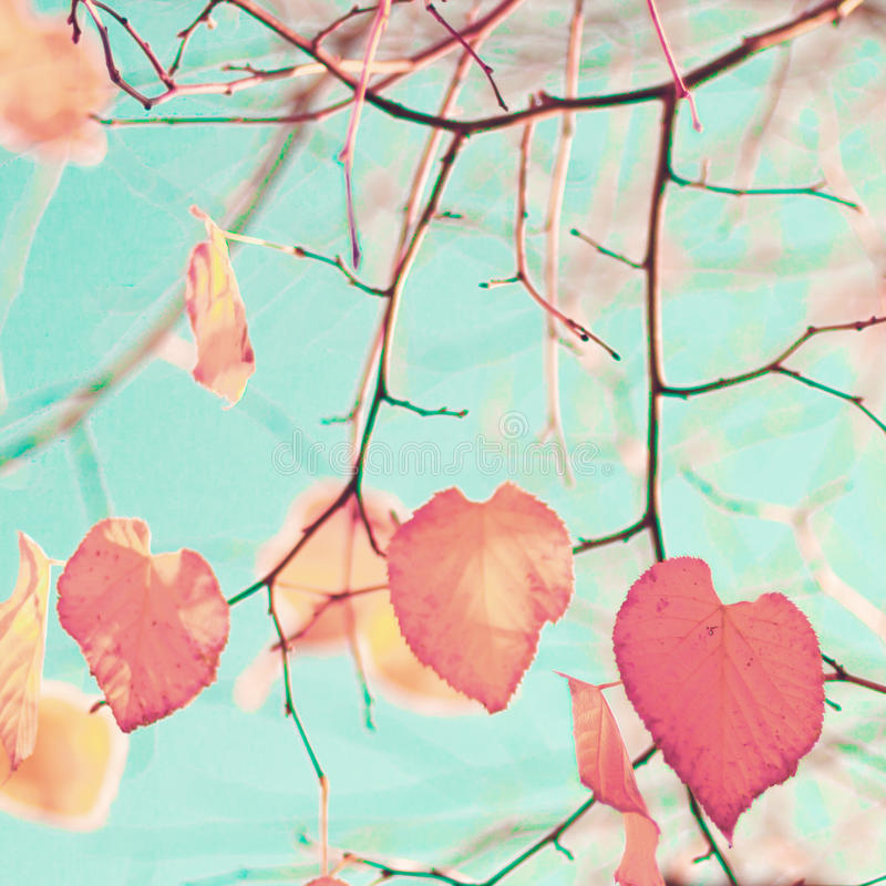 Red heart-shaped leafs royalty free stock photos