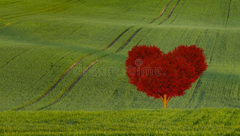 Red heart shaped tree on a green field. Red heart shaped tree-symbol of love stock photo