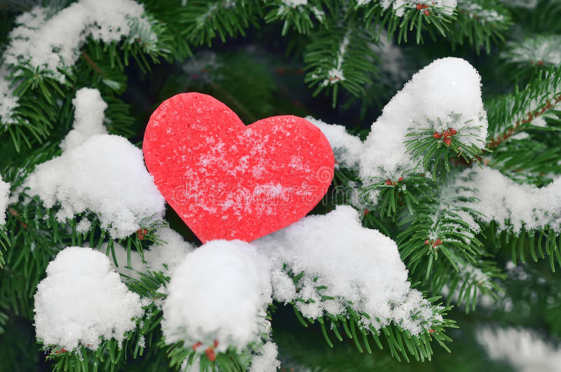 Red heart in snow on christmas tree. Happy New Year love concept stock photos