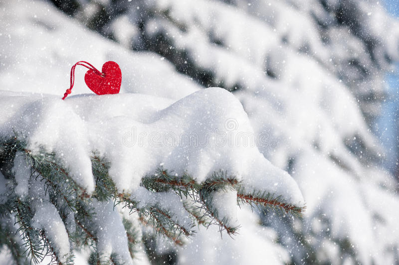 Red heart toy in snowfall on fir. Tree stock images