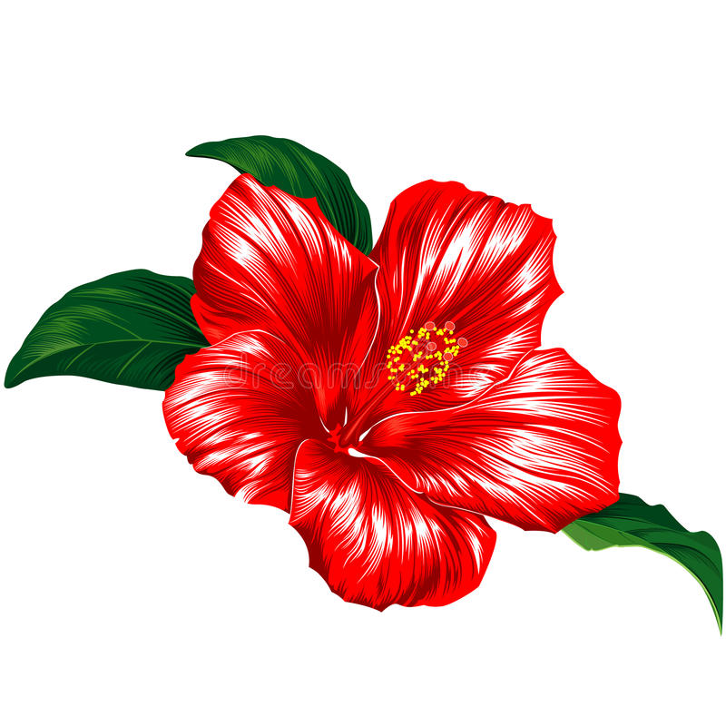 Download Red hibiscus flower stock vector. Image of blossom, beauty - 9373281