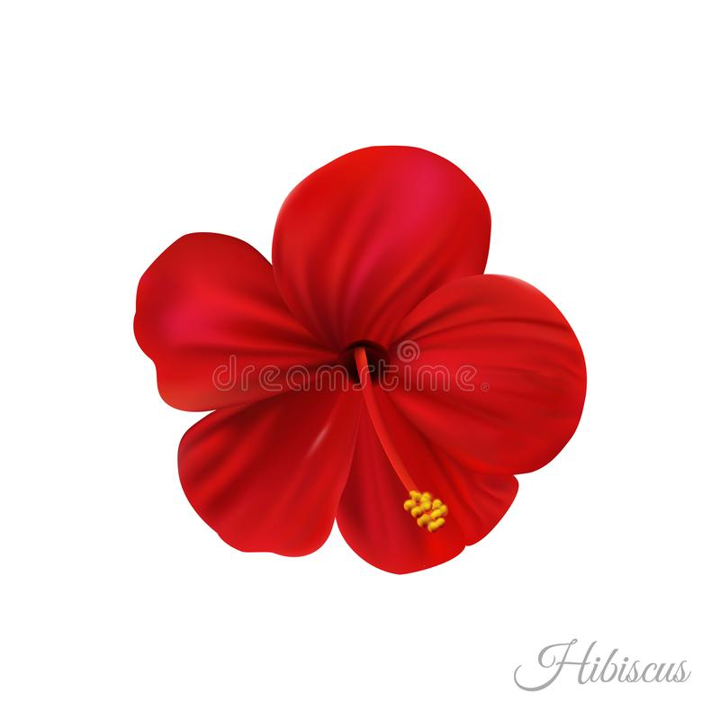 Red hibiscus flower, marvellous hawaii rose. stock photos