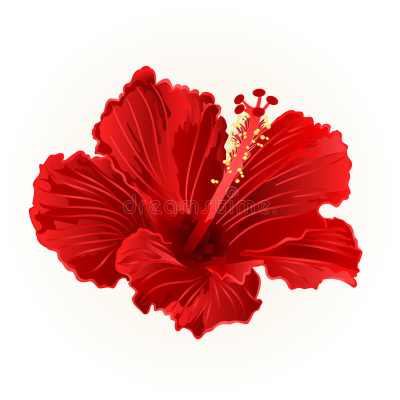 red hibiscus simple tropical flower vintage hand draw vector stock rh dreamstime com hibiscus vector art hibiscus vector files for cricut