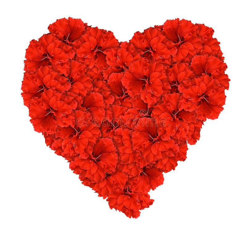 Download Red Hibsicus Flower Love Heart Isolated Stock Photo - Image: 7942302