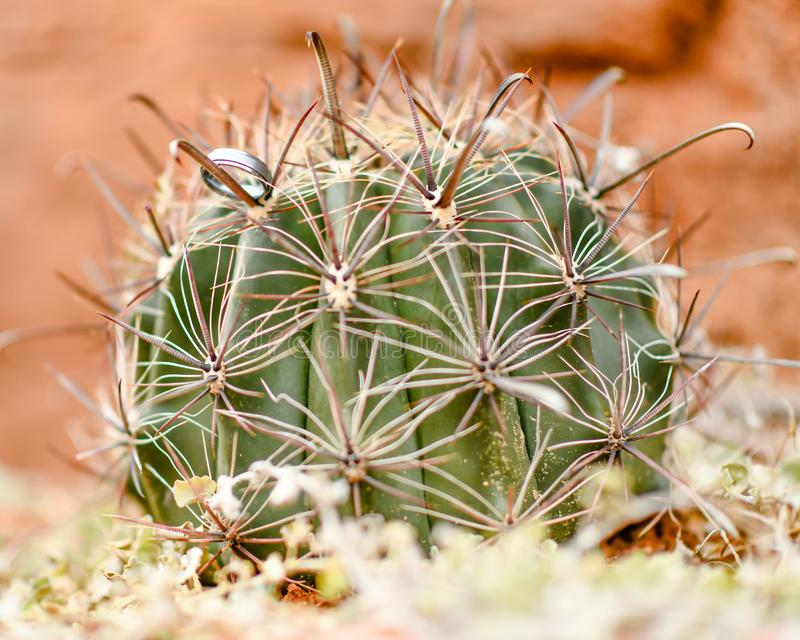 Red Hill Rock Gardens of Southern Utah royalty free stock photos