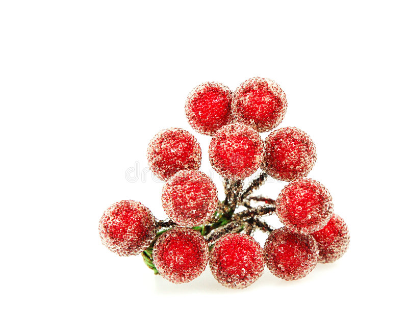 Red Holly Berries. Frosted Red Holly Berries royalty free stock photo