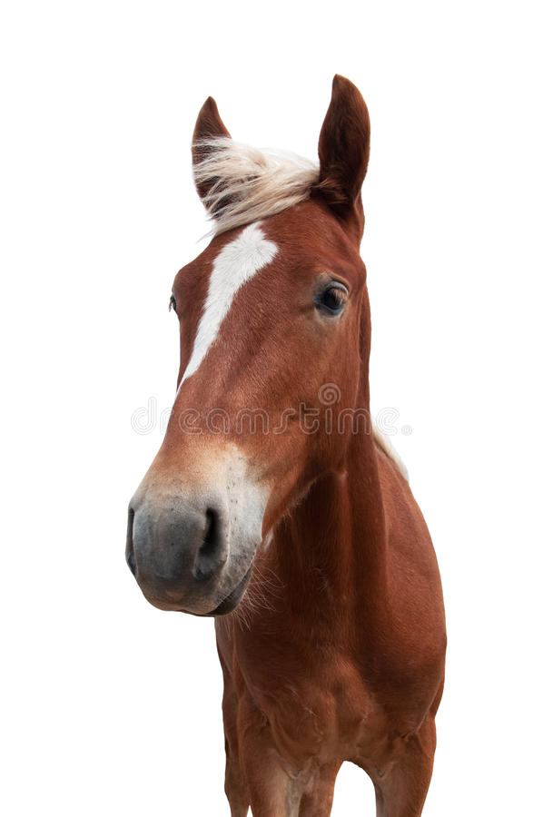 Red horse. With white mane isolated on white background stock photos