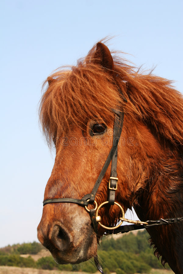 Download Red_horse stock photo. Image of countryside, coat, farm - 766962
