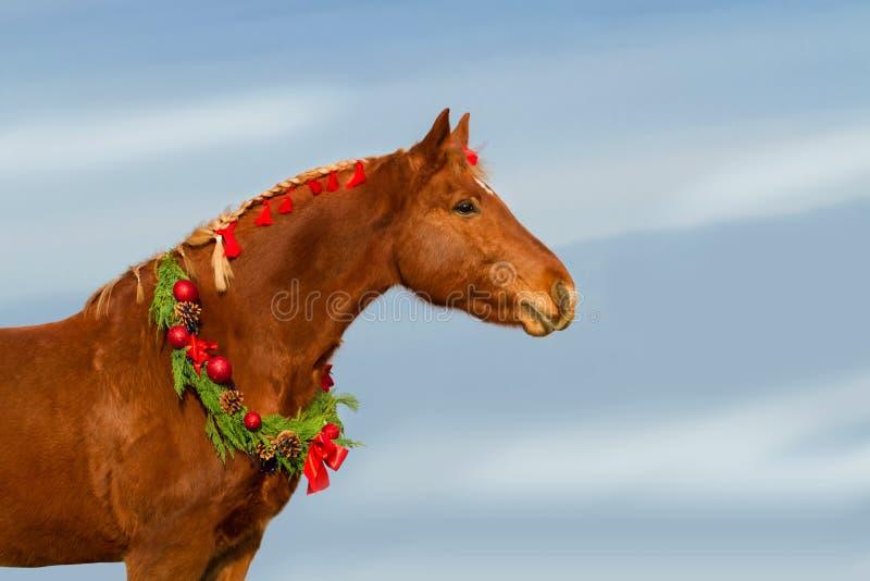Red horse stock photos