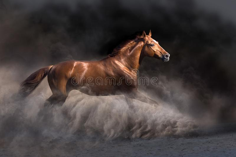 Red horse on dramatic background stock image