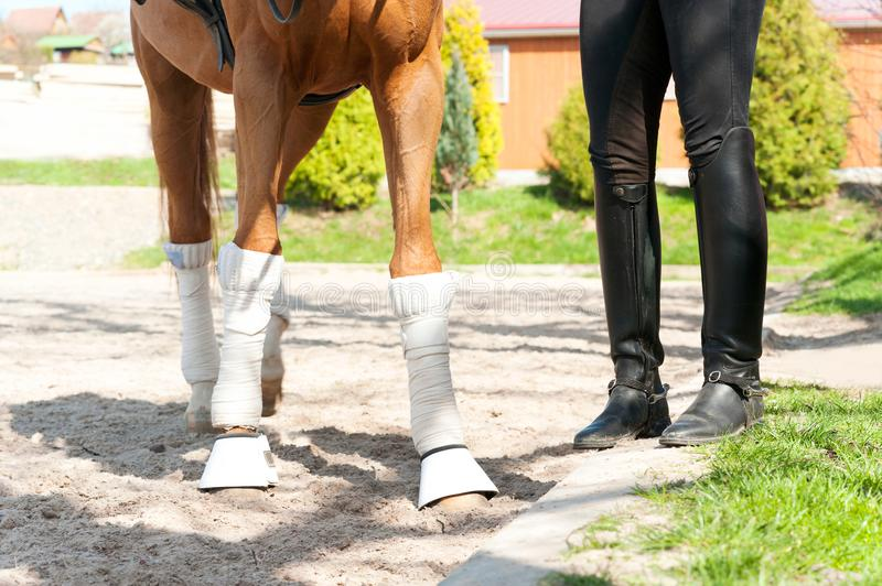 Red horse legs in bandages with riding leather horsewoman boots stock images