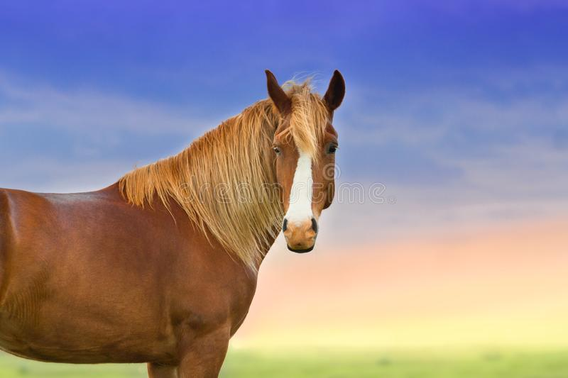Red horse with long mane. Against sunset sky stock photo