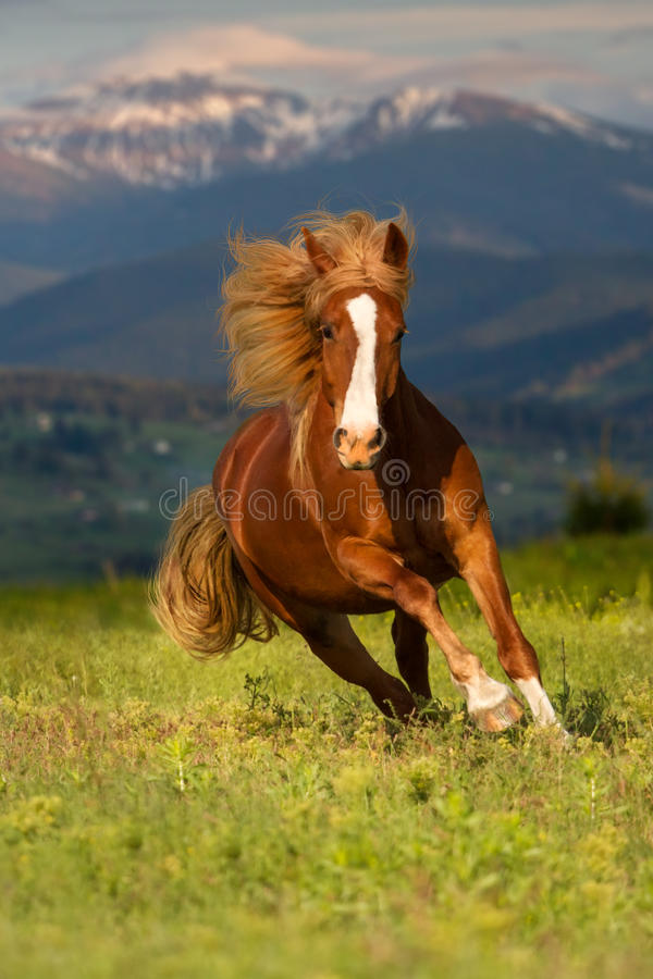 Red horse in mountain. Red horse with long mane run gallop against mountain landscape royalty free stock photos