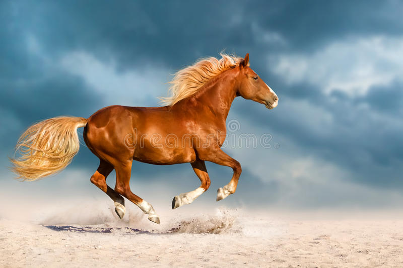 Red horse run in desert. Beautiful red horse run fast in sand against dramatic sky royalty free stock photos