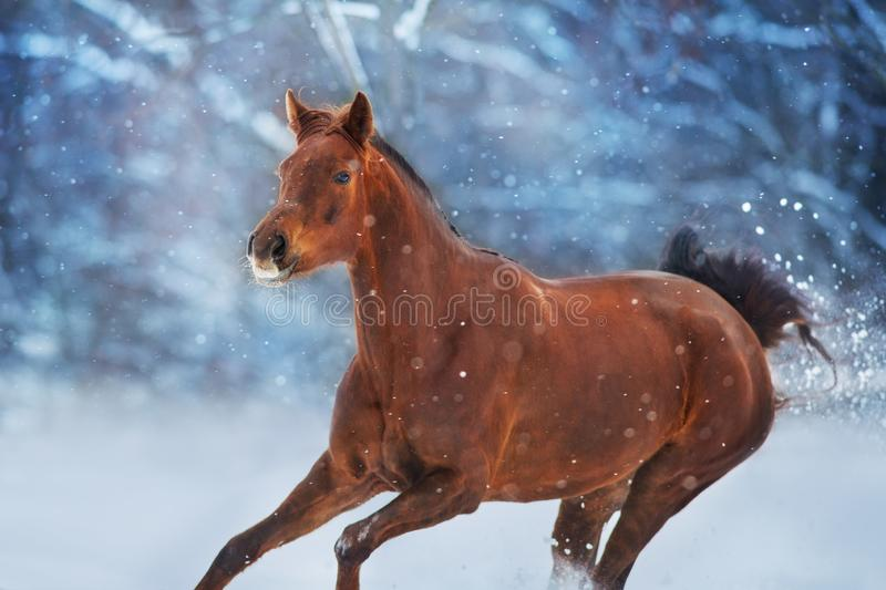 Red horse in snow royalty free stock photos