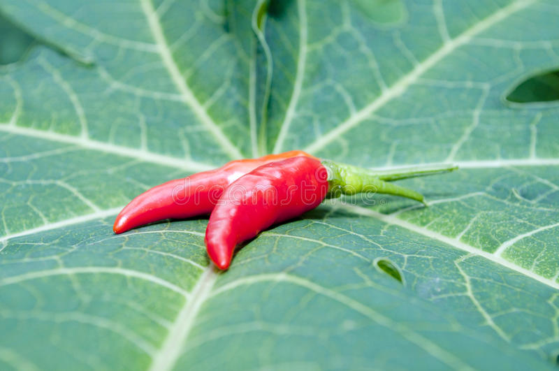 Download Red-hot chili stock image. Image of heat, object, oriental - 22248203