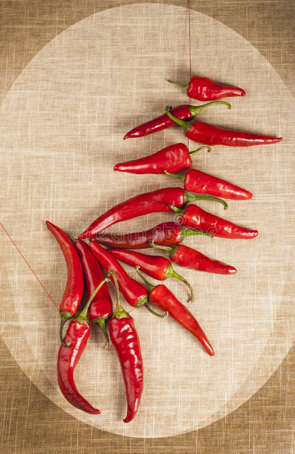 Red hot Chili Peppers framed in oval shape royalty free stock photo