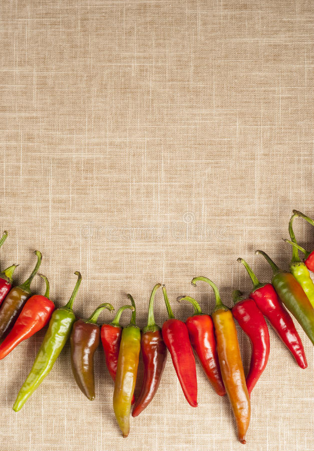 Red Hot Chili Peppers on rope and vintage background royalty free stock photography