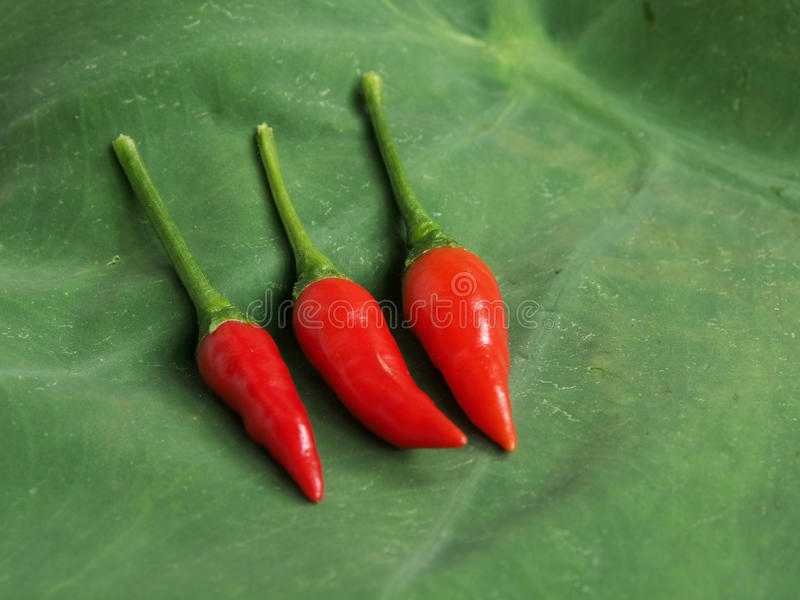 Red hot chilies stock photo