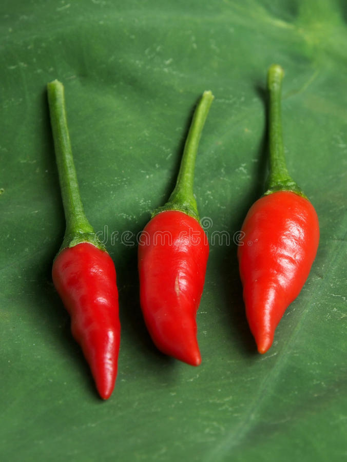 Red hot chilies stock image